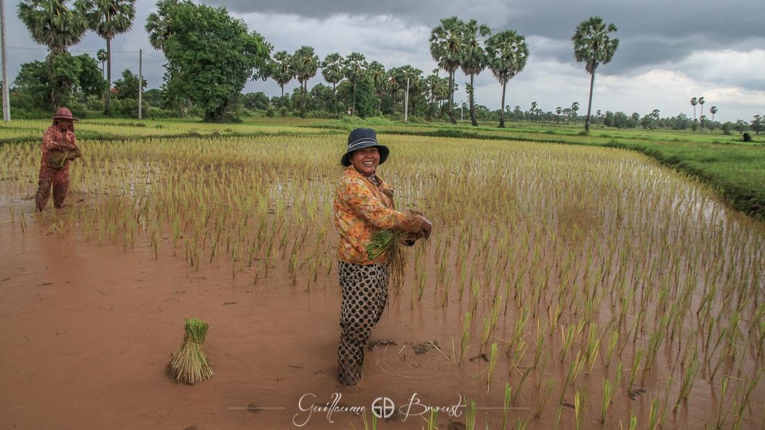 Rice plantations in Cambodia ©Guillaume Broust - Les Chants de l'Eau