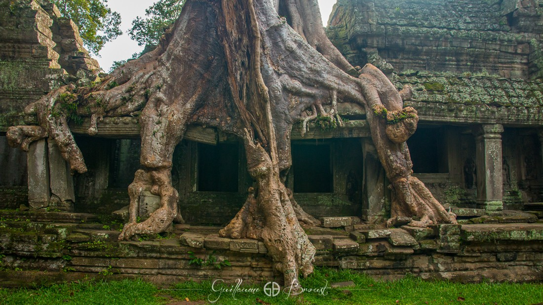 Nature vs Buildings in Angkor - Cambodia ©Guillaume Broust - Les Chants de l'Eau